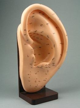 Modelo oreja 20 cm