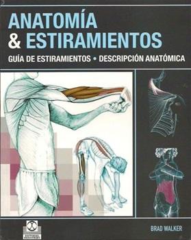 Anatomia y estiramientos